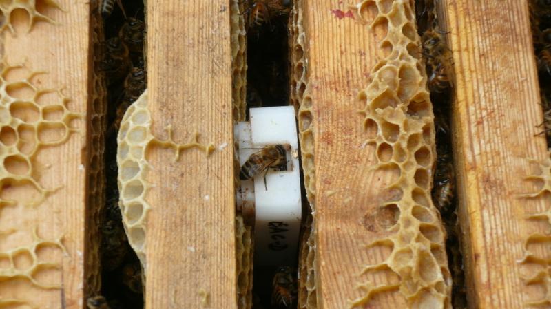 Beestartseatingitswayin